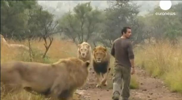 Hrátky se lvy