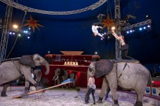 Cirkusové vystoupení se slony