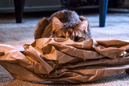 Skrývající se kočka