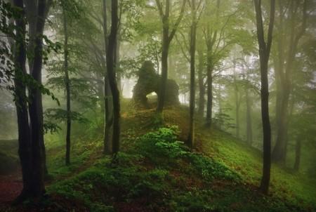 Ruiny v lese